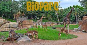 Bioparc di Valencia