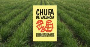 Chufa de Valencia - Denominazione d'Origine
